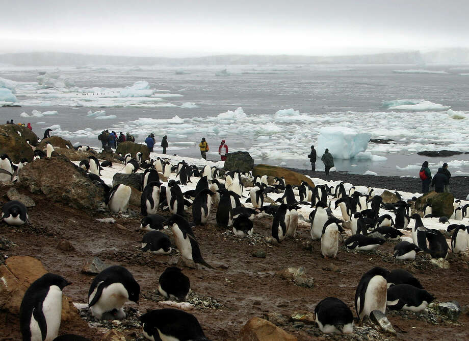 """FILE - In this file photo dated Dec. 12, 2005, tourists observe scores of Adelie penguins gathered at Brown Bluff on the northern tip of the Antarctic Peninsula.  According to research released Sunday Oct. 15, 2017, by environmental group WWF,  scientists say a """"catastrophic breeding failure"""" occurred when thousands of chicks from an Adelie penguin colony died of starvation last summer when adult penguins were forced to travel further for food, with only two chicks surviving the existential phenomena. (AP Photo/Brian Witte, FILE) Photo: BRIAN WITTE, STF / AP2005"""