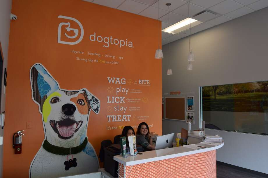 Dogtopia is now open at 6240 Westheimer. Photo: Dogtopia