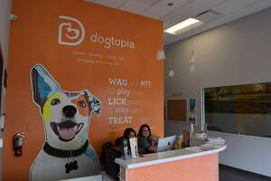 Dogtopia is now open at 6240 Westheimer.