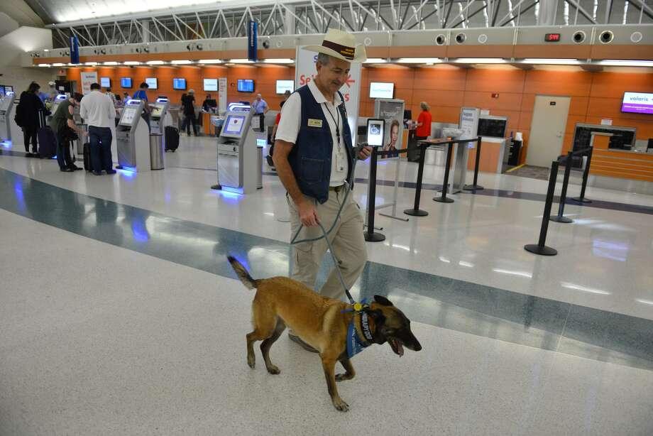 Airport Ambassador Benjamin Bott walks with Helo as part of the Pups and Planes program at the San Antonio International Airport. Photo: Robin Jerstad /For The San Antonio Express-News