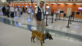 Airport Ambassador Benjamin Bott walks with Helo as part of the Pups and Planes program at the San Antonio International Airport.