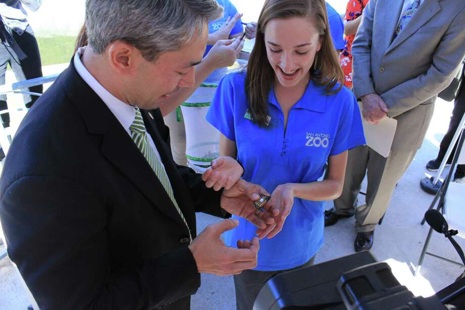 San Antonio Mayor Ron Nirenberg helped tag a monarch butterfly Monday as he reconfirmed the city's commitment to monarch butterflies by taking the National Wildlife Federation's Mayors' Monarch Pledge. Photo: Brendan Gibbons / San Antonio Express-News