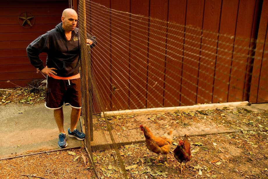 Derrick Torres checks on a neighbor's chickens while living in an evacuated area of Kenwood, Calif., on Monday, Oct. 16, 2017. Torres and his wife have tended to the neighborhood's animals since last Monday. Photo: Noah Berger, Special To The Chronicle