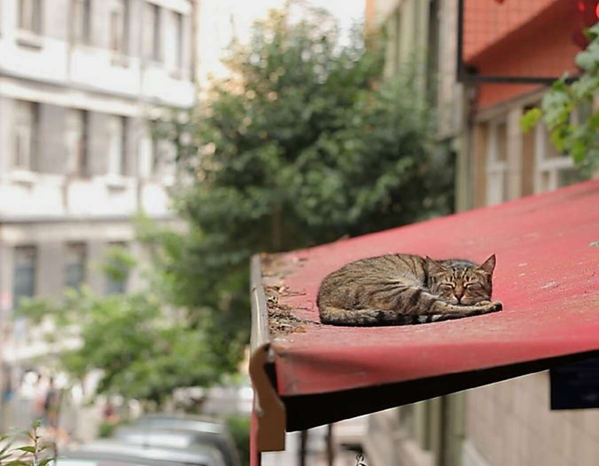 """The most-nominated documentary at this year's Critics Choice Awards: """"Kedi,"""" about the multitude of stray cats in Istanbul (not Constantinople). Photo courtesy Oscilloscope."""