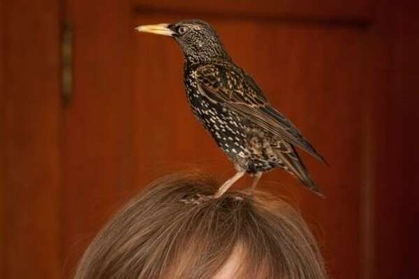 """Lyanda Lynn Haupt, author of """"Mozart's Starling,"""" was inspired by a story of the great composer having a bird who sang one of his musical themes, sort of."""