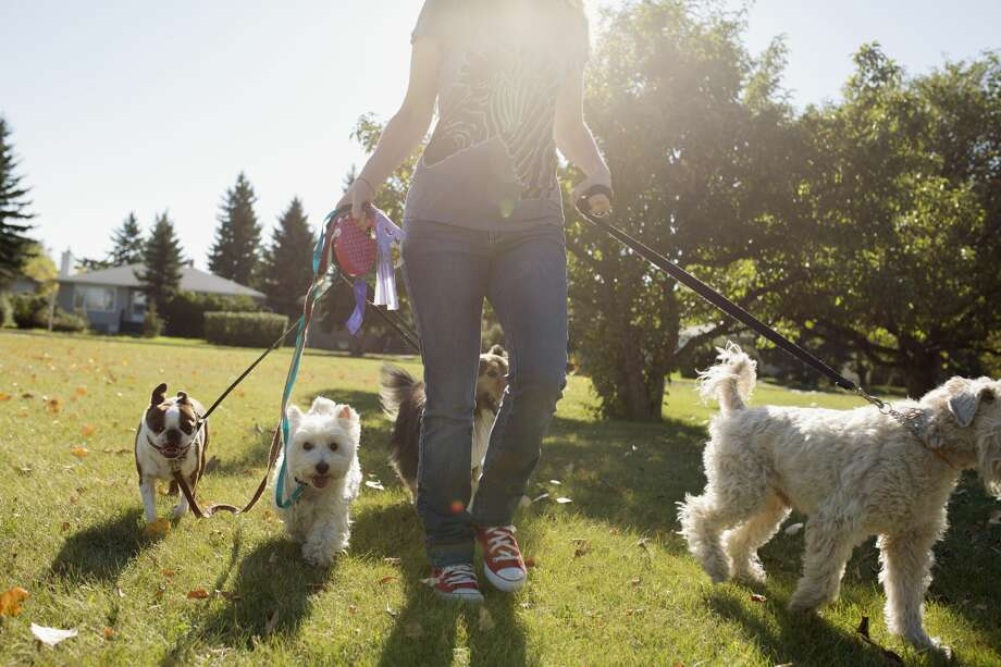 Wag, the 'Uber for dog-walking,' is drawing scrutiny for