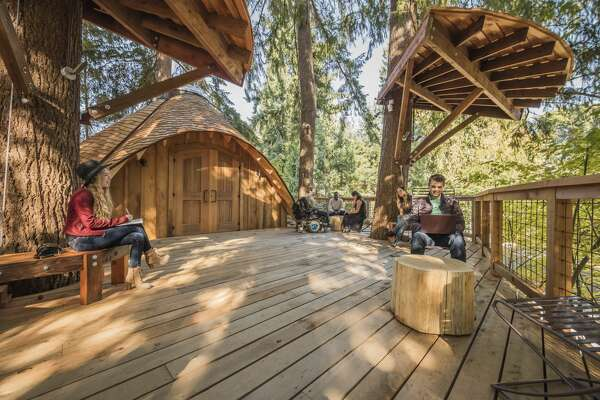 A look at Microsoft's new tree house meeting spaces, which allow employees to take in nature while they work.