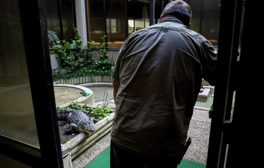 """Troy Stuart, a maintenance worker at First National Bank, talks to """"Lucy,"""" one of two alligators that live in the atrium of the bank, Friday, Aug. 18, 2017, in Alvin. Stuart likened the alligators to puppies. """"I get the same excitement a little kid gets on Christmas,"""" he said. ( Jon Shapley  / Houston Chronicle ) Photo: Jon Shapley, Staff / © 2017 Houston Chronicle"""