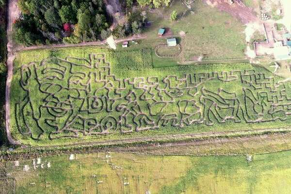 Dr. Jan Pol, whose TV reality series details goings-on at his central Michigan veterinary practice, is the topic of this year's corn maze at Grandma's Pumpkin Patch on Eastman Road in Midland. The corn maze is open Wednesdays, Saturdays and Sundays though Oct. 29. (photo provided)