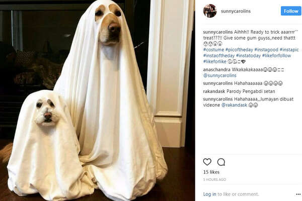 The Halloween pet costume ideas have been plentiful and insanely cute on Instagram.