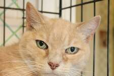 """Peanut is waiting for her new """"forever"""" home."""