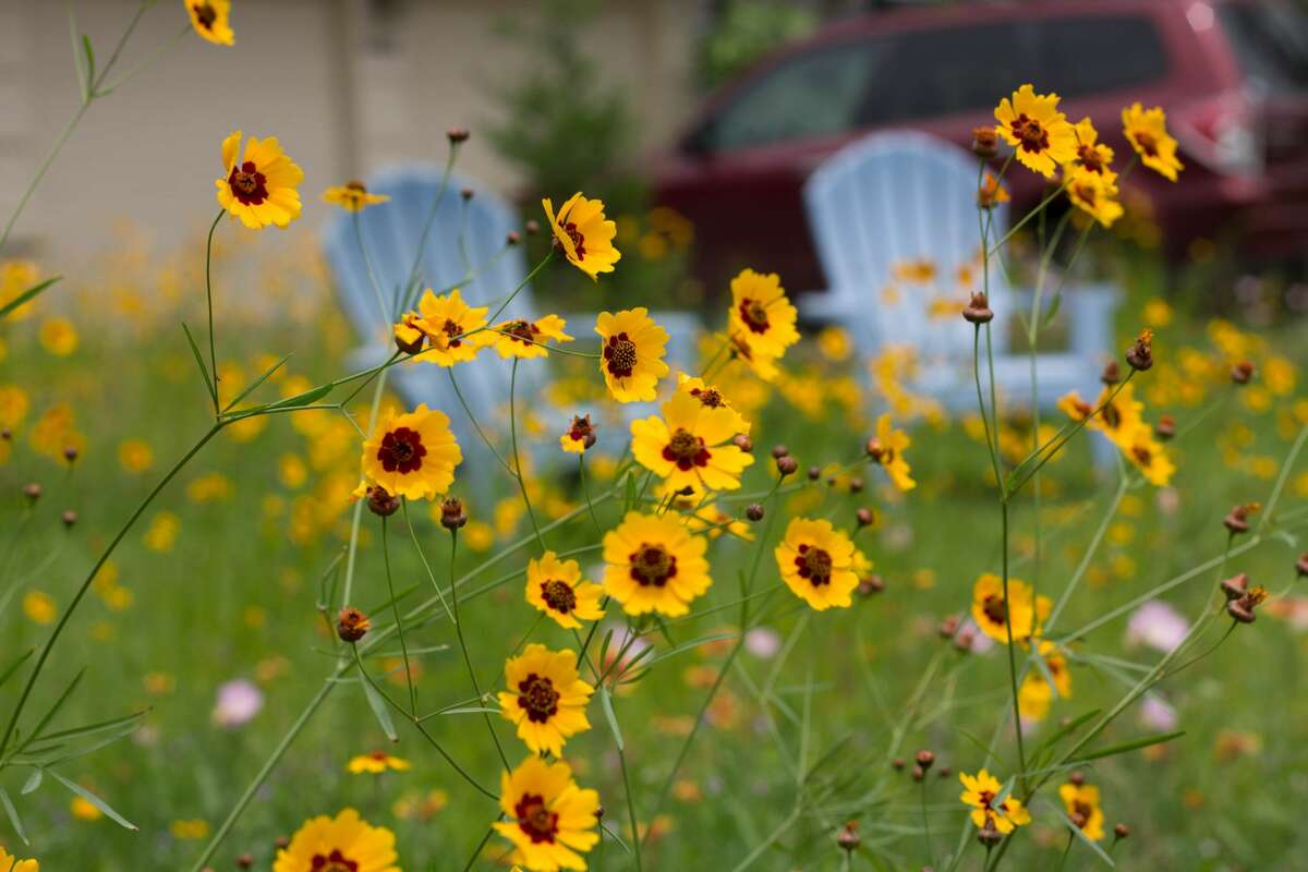 Even front yards can become pocket prairies.