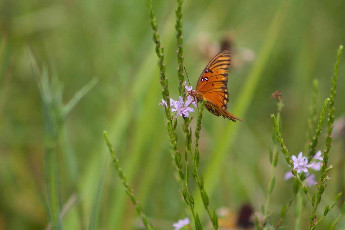 Pocket prairies can provide habitat for wildlife.
