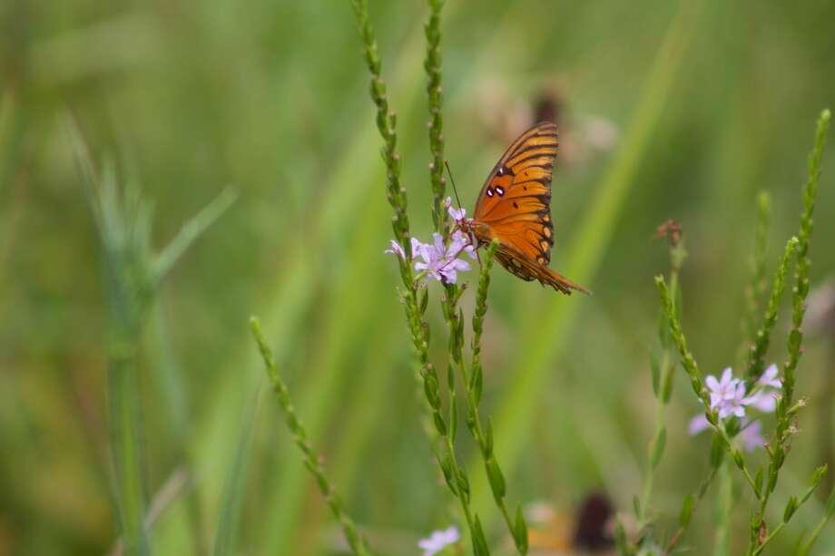 Pocket prairies can provide habitat for wildlife. Photo: Jaime Gonzalez