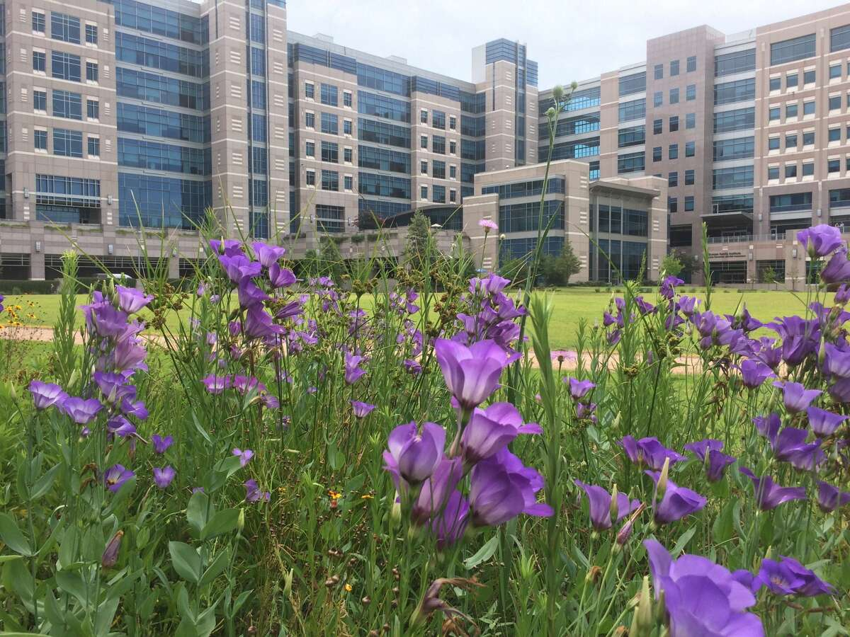 The MD Anderson Prairie in spring.