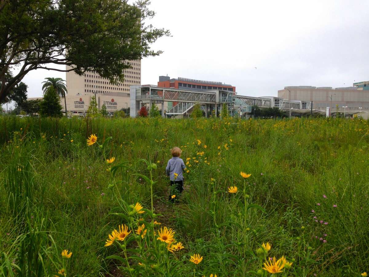 A boy explores the pocket prairie in the Med Center.