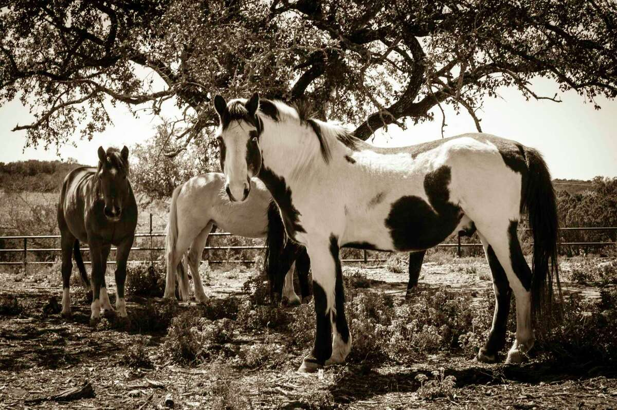 Habitat for Horses is a nonprofit committed to the prevention, rescue and rehabilitation of neglected, abused and homeless equine.