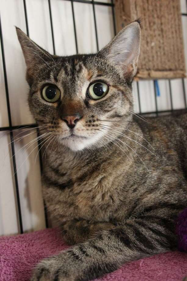 Unique is a lovely girl who's waiting for a new home. Photo: Contributed Photo / Not For Resale