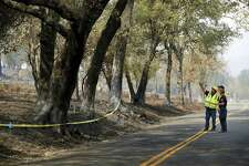 Investigators look at a line of oak trees along Atlas Peak Road, where branches extended through overhead utility lines, possibly causing the Atlas Fire.