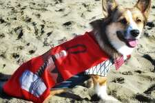 Nismo  came dressed as superhero Thorgi (err, Thor) at Saturday's Corgi Con.