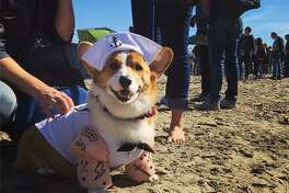 This corgi was showing off his leg work with his Popeye costume at Saturday's Corgi Con.