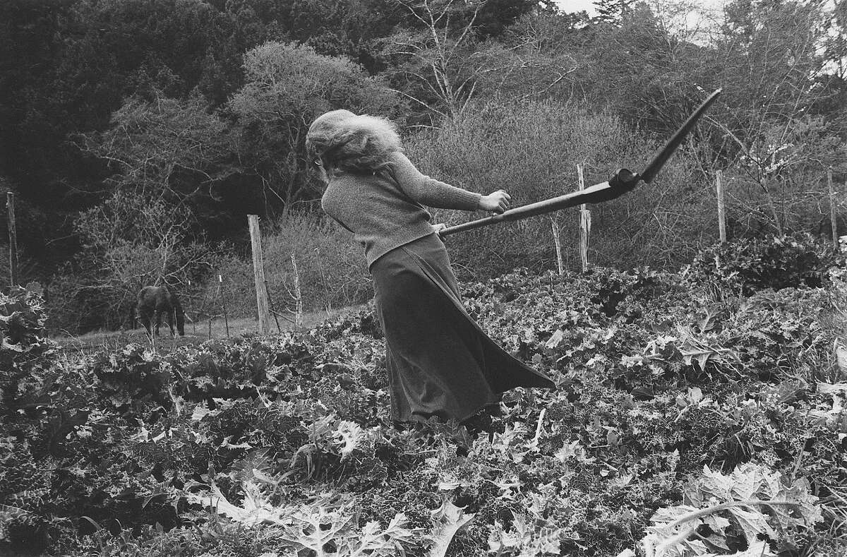 Leah cutting thistles at Paradise Valley Agricultural Commune Bolinas 1975