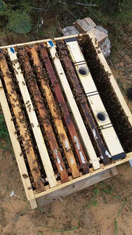 Abejas trabajan en un panal en la producción de miel. Photo: Foto De Cortesía /Alberto García
