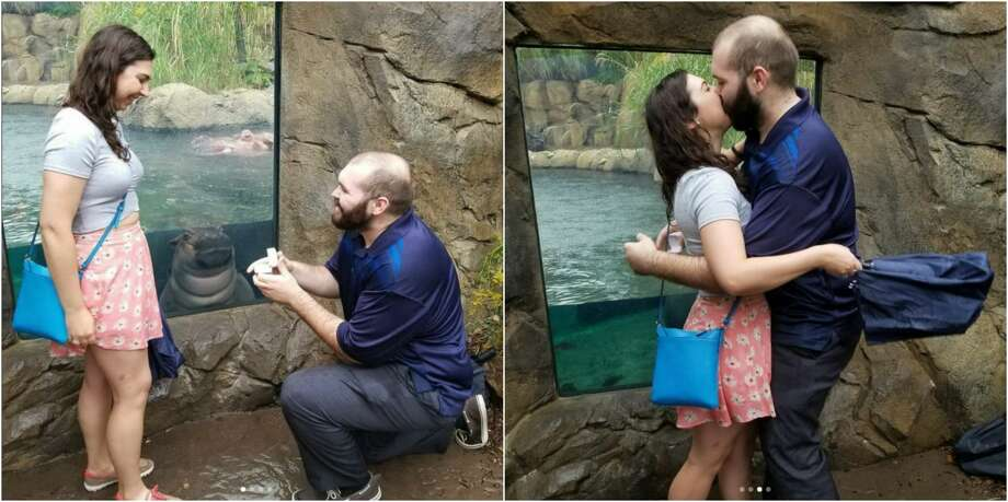 A Cincinnati couple timed their heir engagement photos just right to capture the Cincinnati Zoo's Fiona the hippo in them on Oct. 8. Photo: Hayley Roll/Instagram
