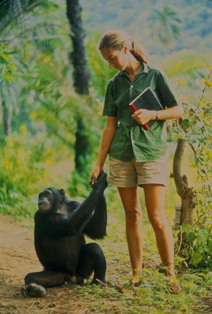 "Jane Goodall with a chimpanzee in 1960s Tanzania in the documentary ""Jane."" Photo"