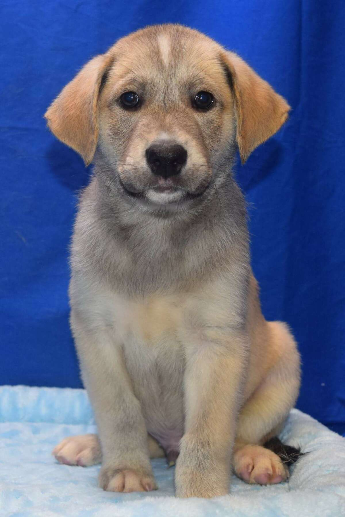 This puppy, named Link by new owner Andy Fortner, 13, was among the almost 20 dogs adopted from Friendswood Animal Control on Sept. 5, breaking a record for single-day adoptions in the city.