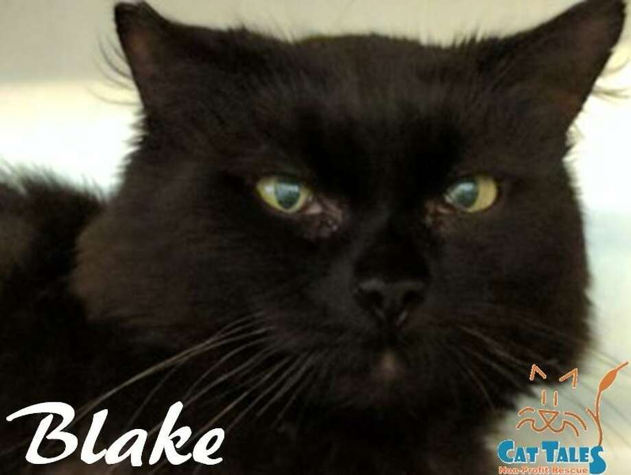 Blake is still waiting for a home of his own. Photo: Contributed Photo / Not For Resale