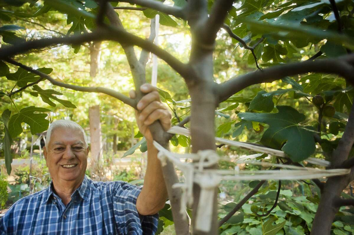 Sanford resident Louis Vescio poses for a portrait next to the fig tree in his front yard on September 29, 2017. (Katy Kildee/kkildee@mdn.net)