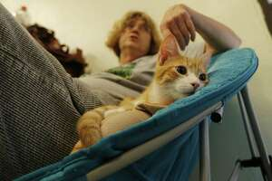 Donna Dickerson of San Antonio Feral Cat Coalition sits with a rescued cat named Cassidy at the San Antonio Cat Cafe Saturday, Oct. 21, 2017. (Kin Man Hui/San Antonio Express-News)