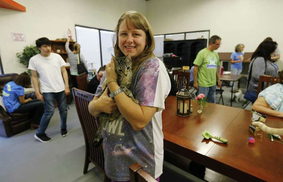 Founder Casey Steuart (center) and her nonprofit San Antonio Cat Cafe - S.A.'s first - plans to open Oct. 29. On Saturday, Oct. 21, 2017, Steuart held a soft opening for guests and for the cats to acclimate and finalize their setup. The Cat Cafe has two parts under the same roof: the cafe, for coffee, cupcakes, etc. and then separated by a wall is the cat room, where patrons can take their cafe purchases and hang out with the cats while they sip and nosh. Cats are all available for adoption and come from various feline rescue groups. (Kin Man Hui/San Antonio Express-News) Photo: Kin Man Hui /San Antonio Express-News / ©2017 San Antonio Express-News