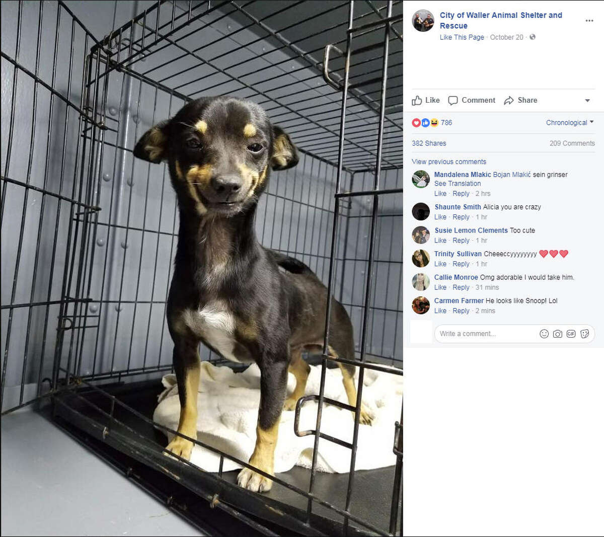 Cheech, a smiling shelter dog, went viral after the City of Waller Animal Shelter shared pictures of him on Facebook. Cheech was adopted less than a week after his photos were shared online.Image source: FacebookSee how dogs may be trying to communicate with you up ahead.