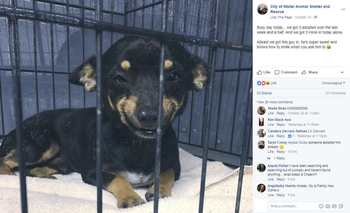 Cheech, a smiling shelter dog, went viral after the City of Waller Animal Shelter shared pictures of him on Facebook. Cheech was adopted less than a week after his photos were shared online.Image source: Facebook