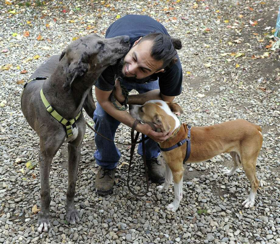 Cesar Martinez of Danbury, a volunteer with Tails of Courage, spends time with Lorenzo, left, and Braulio, two dogs rescued from Puerto Rico , Tuesday, Oct. 24, 2017. Tails of Courage on Smith Street in Danbury has taken in close to 60 dogs fleeing Erma and Maria this storm season. Photo: Carol Kaliff / Hearst Connecticut Media / The News-Times