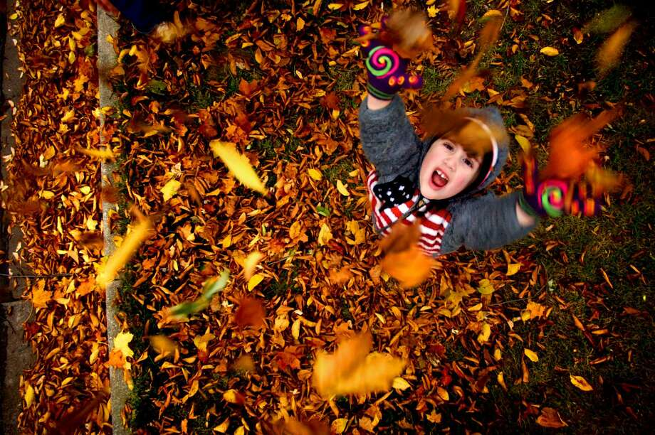Fallen leaves can make excellent mulch, an insulating layer between the soil and air. Photo: Scott Anderson /AP / RACINE JOURNAL TIMES