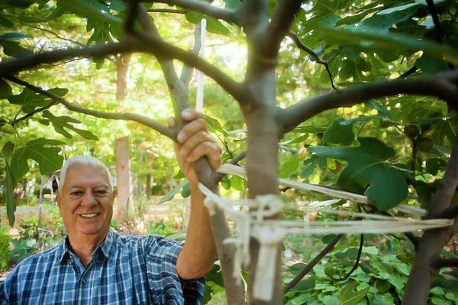 Sanford resident Louis Vescio poses for a portrait next to the fig tree in his front yard on September 29. (Katy Kildee/kkildee@mdn.net)