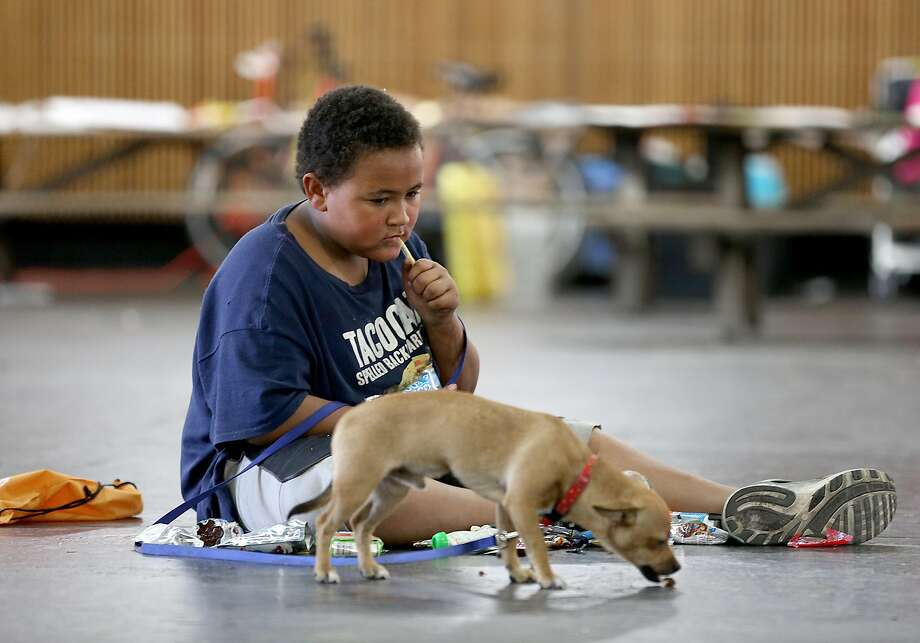 Ocean Smith, 10, of Clearlake, and his dog, Travis Lee, are among the fire victims awaiting assistance at the Sonoma County Fairgrounds Red Cross shelter in Santa Rosa. Photo: Liz Hafalia, The Chronicle