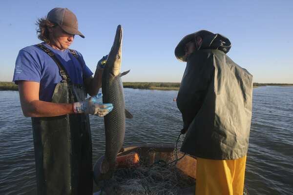 Texas Parks and Wildlife employee John Haferick, left, and intern Zach Russell remove an alligator gar from the waters of Espiritu Santo Bay in the Gulf of Mexico Oct. 17, 2017. Such internships are important to those just launching careers, why a state program to facilitate internships should be approved.
