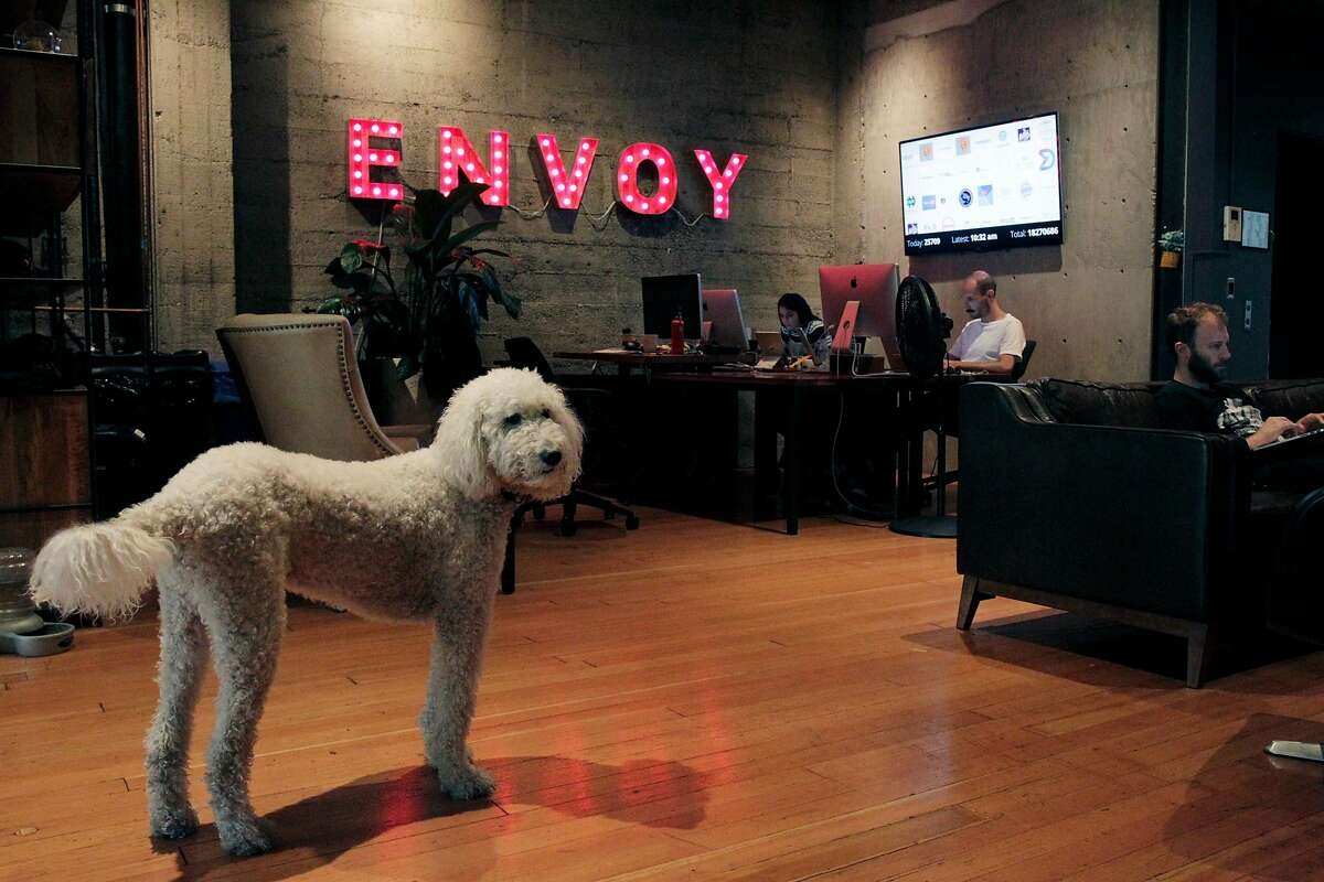 Milo (left) stands next to Ben Angel (right) while he and others work at Envoy on Friday, October 27, 2017 in San Francisco, Calif.