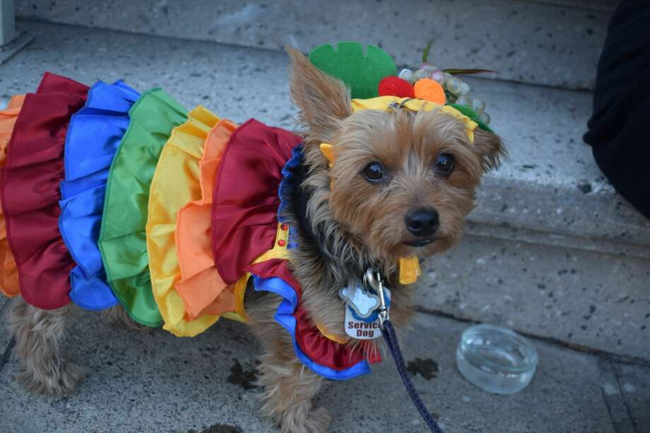 Pups of all kinds showed off their Halloween costumes at Farley's 28th Annual Pet Parade on Potrero Hill Saturday. Photo: Filipa Ioannou/SFGATE