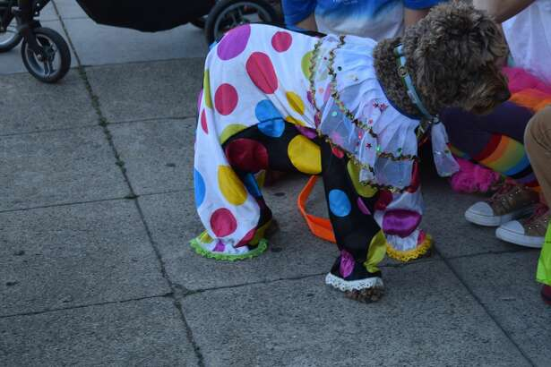 Pups of all kinds showed off their Halloween costumes at Farley's 28th Annual Pet Parade on Potrero Hill Saturday.