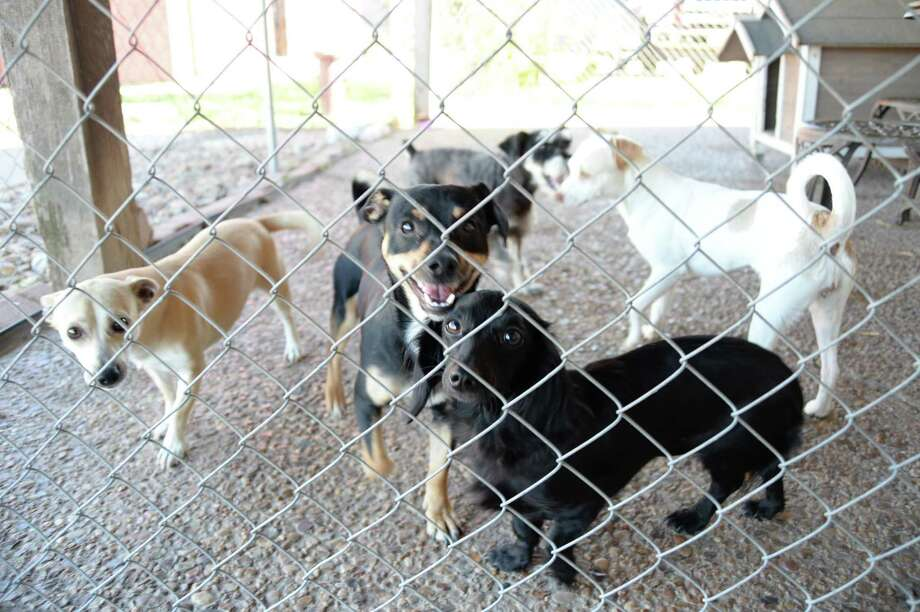 The staff at Deer Park A New Dawn say it's 'a gut feeling' that Hurricane Harvey has generated more interest in pet adoption. Photo: YvetteOrozco