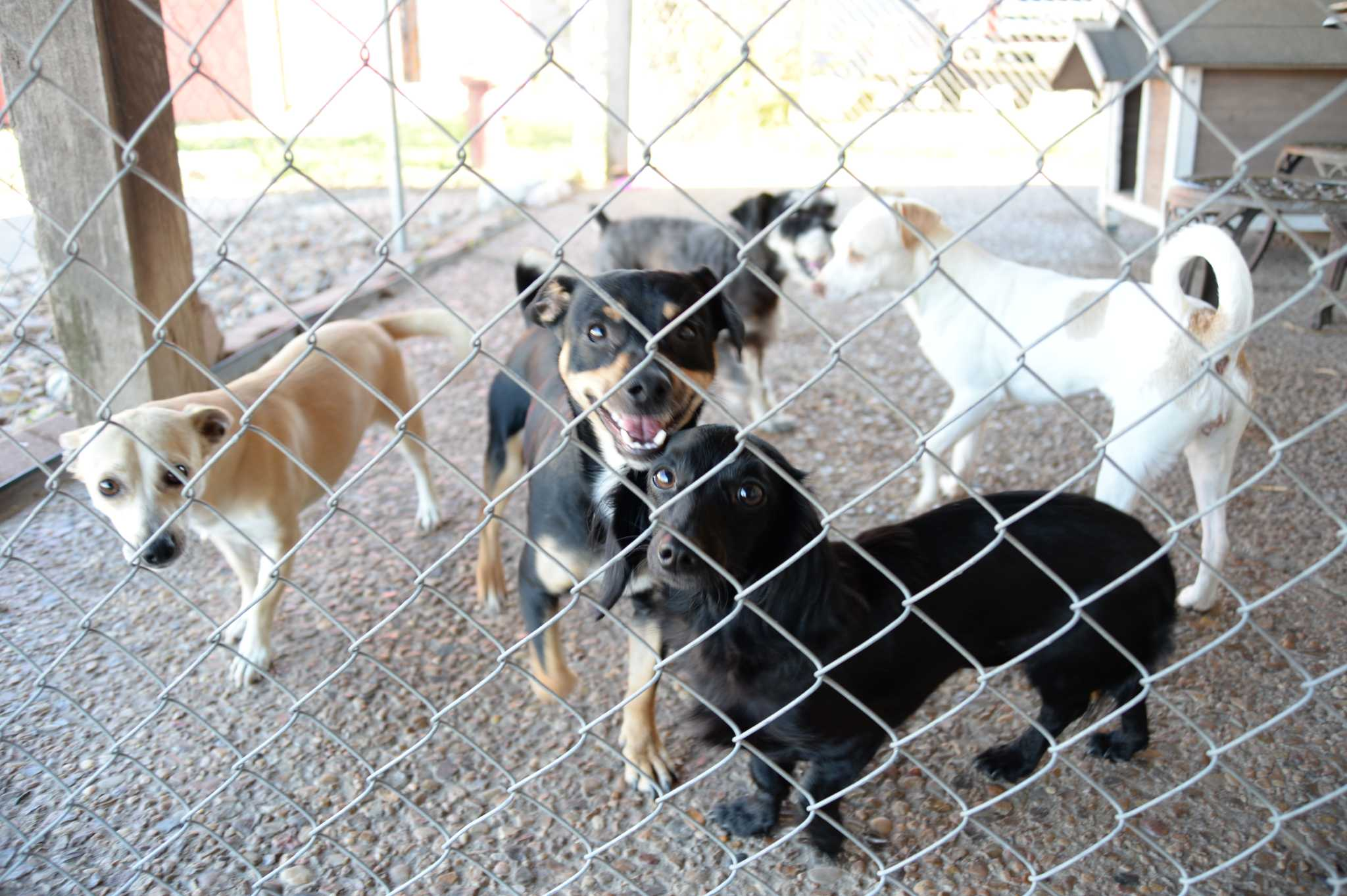 Harvey generates increased interest in pet adoptions in Pasadena