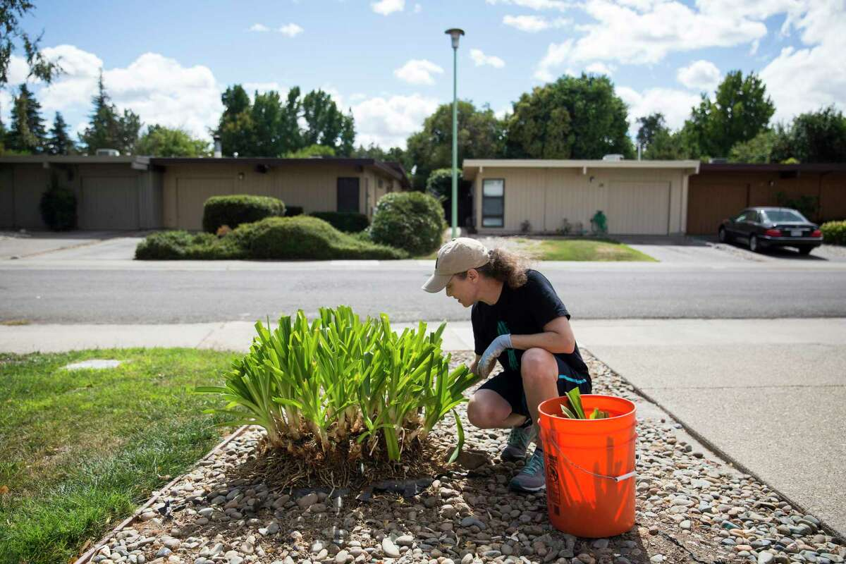 Marion Townsend gardens at her home in the South Natomas neighborhood of Sacramento, Calif. Townsend says she knows the neighborhood is at risk for flooding.