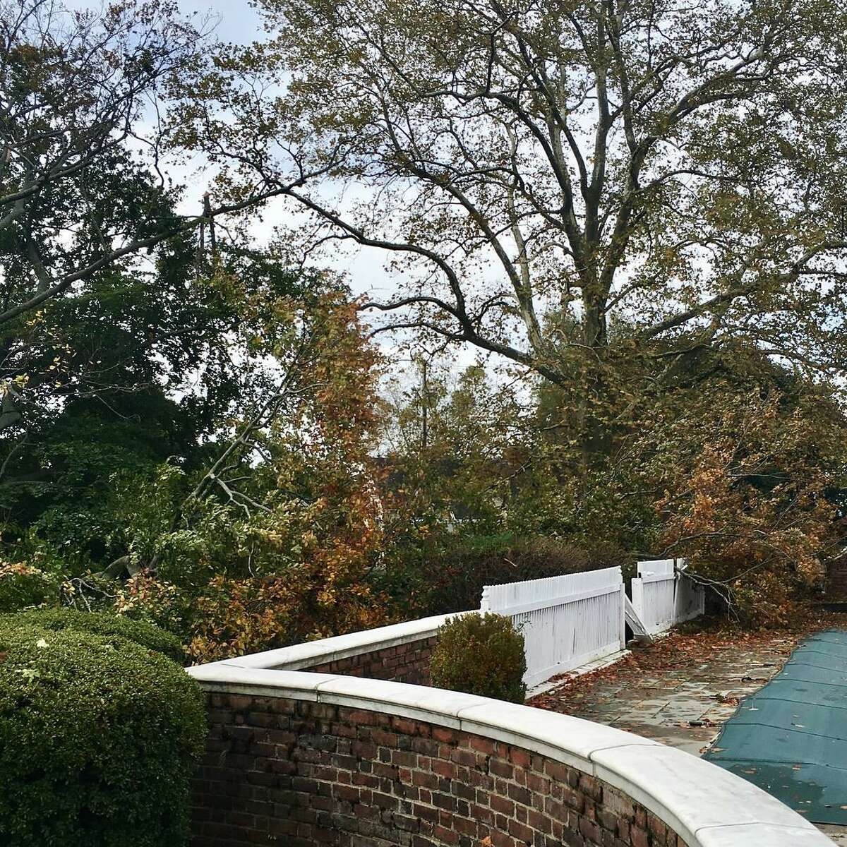 Strong winds blew down a landmark copper beach tree in Bridgeport's Black Rock section on Sunday, Oct. 30. 2017. The tree is located on Hilltop Road, part of