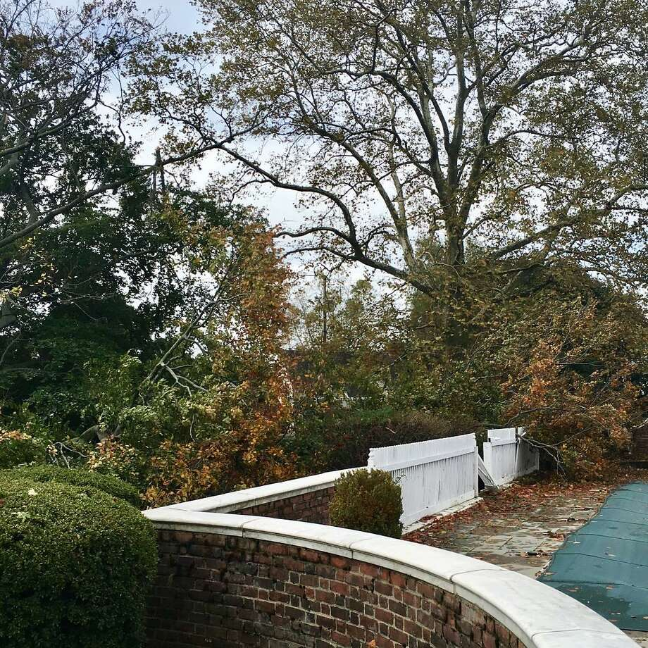 "Strong winds blew down a landmark copper beach tree in Bridgeport's Black Rock section on Sunday, Oct. 30. 2017. The tree is located on Hilltop Road, part of ""The Chimneys"" mansion. The 200-year old European copper beech is listed as one of Connecticut's Notable Trees. At 92 feet tall, it measured at 247 inches in circumference with an average spread of 109 feet. Photo: Ashley Wickwire Sikora /Contributed Photo"