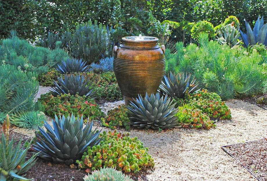 "A copper-colored fountain serves as a Bay Area garden's glistening focal point. Repeating its orange hue are the edges of Agave 'Blue Glow' and Sedum 'Pork and Beans.' In the background are Senecio vitalis and euphorbia shrubs.  Photo: Rebecca Sweet from ""Designing With Succulents"" / Timber Press Photo: Rebecca Sweet"